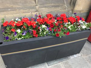 A bright red floral display